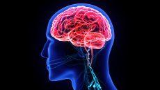 Protección cerebral