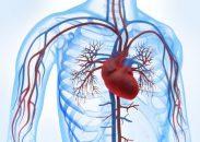 Artículos más leídos sobre enfermedad vascular periférica